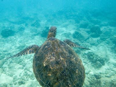 Snorkel Kauai