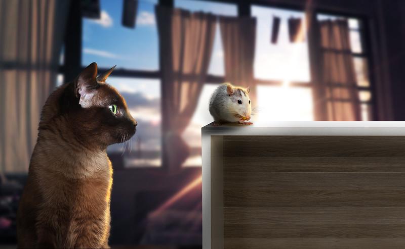cat-mice1.jpg