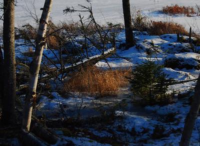 Snow - January 2008.