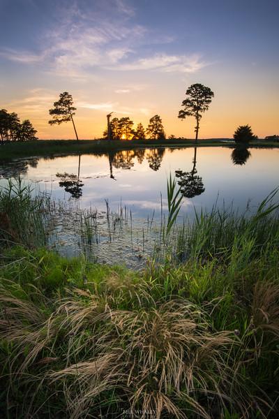 Pond-1.jpg