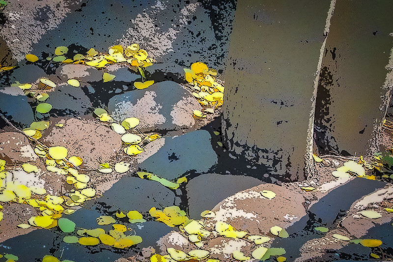 August 22 - Early autumn leaves.jpg