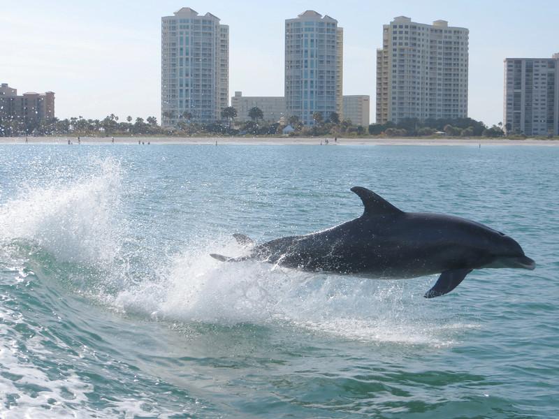 Dolphin_0790.JPG