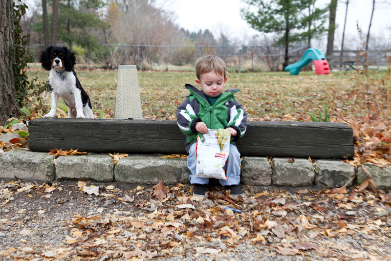 Hunter and Teddy sit on some bricks in Mattoon, Illinois on Saturday, November 20, 2010.  (Jay Grabiec)