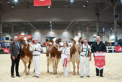 Holstein RW Winners Circle