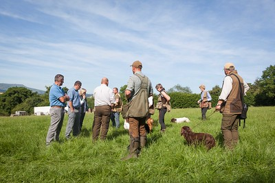 Gundog Training Groups 2018