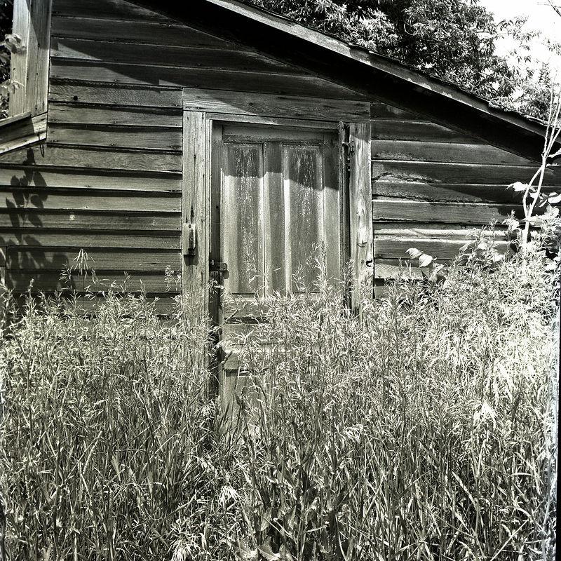 Door and weeds.jpg