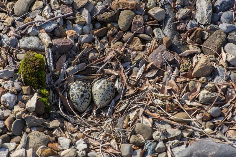 Lowes-nest-2eggs-April13.jpg