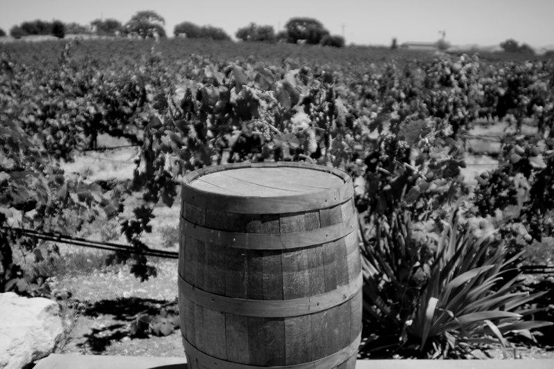 barrel and viines.jpg