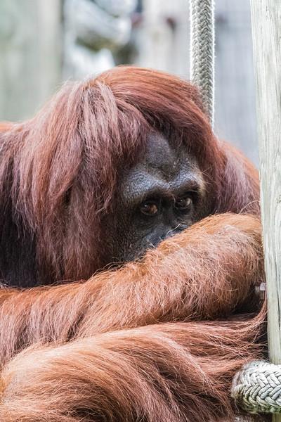 9-19-15  Lowry Park Zoo