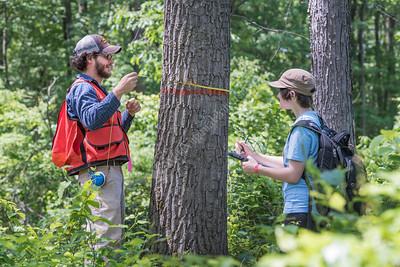 32112 Davis Magazine Hardwood Tree Field Research June 2016
