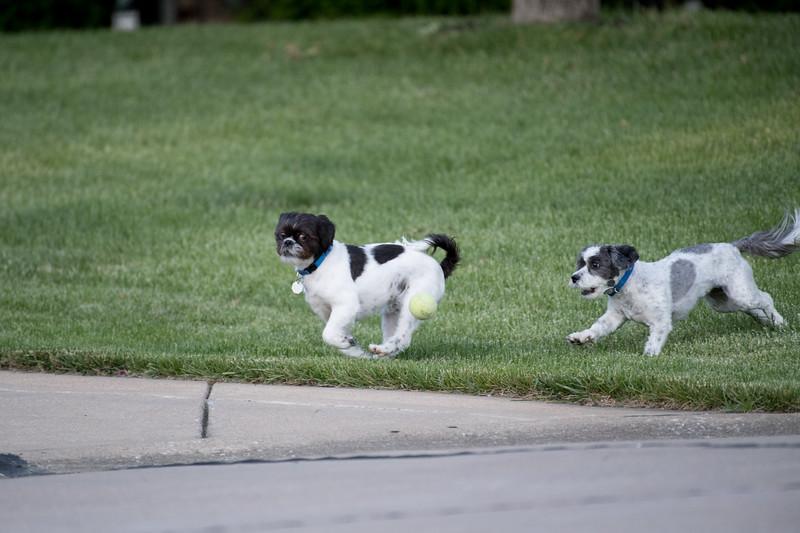 LuLu - Brady - Cooper Play Friends (35 of 109).jpg