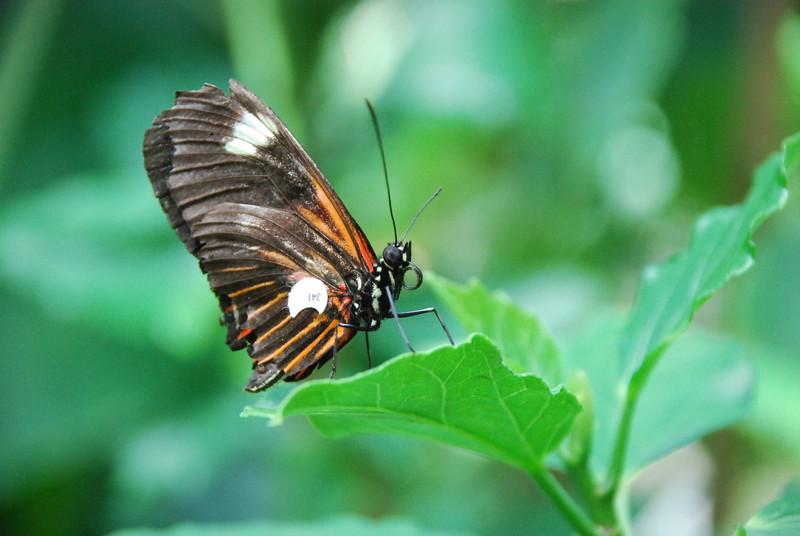 Denver Butterfly Pavilion 2432056393.jpg