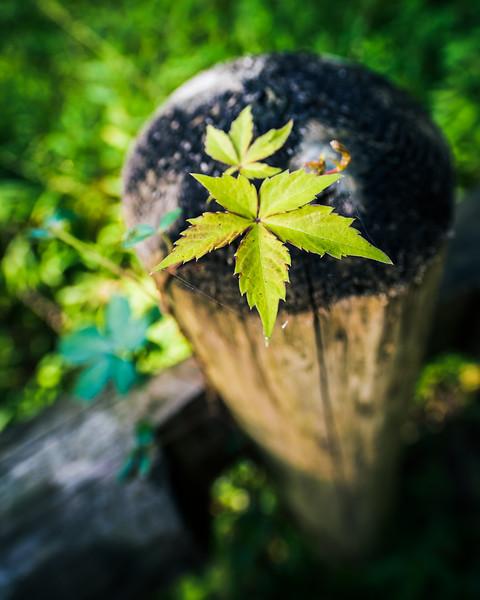 """Leaves"" - www.rajguptaphotography.com"