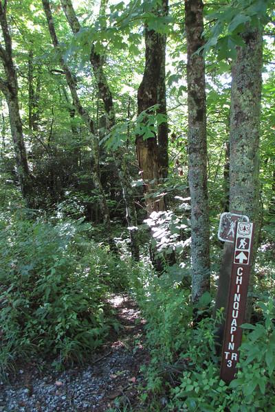 NC-106 - Chinquapin Mountain Trailhead