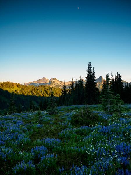 Mt. Rainier-10.jpg