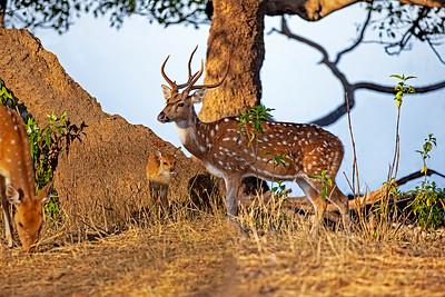 India - Other Wildlife