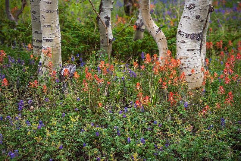 Saddle Mountain Flowers.jpg