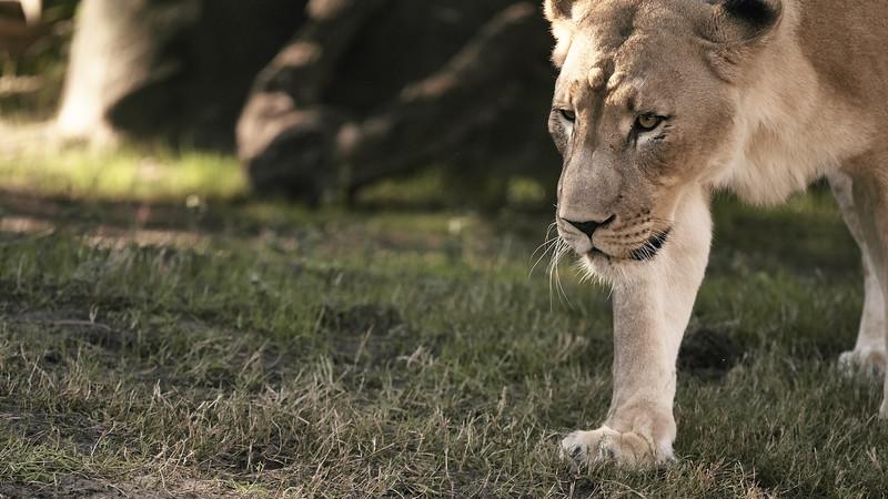 20181030 - Houston Zoo-DSC_0818.jpg