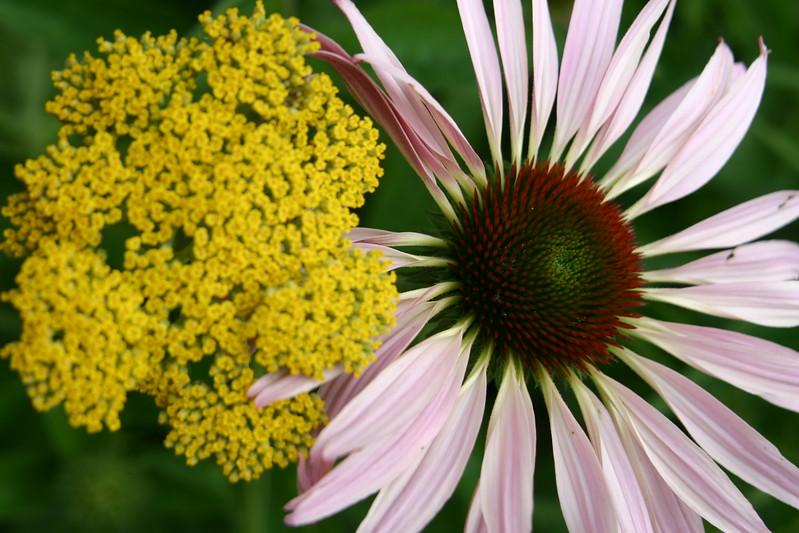 Music-Flowers 024.jpg