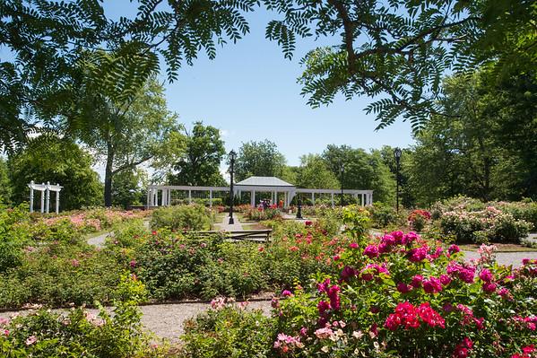 6/23/21 Delaware Park Rose Garden and Hoyt Lake