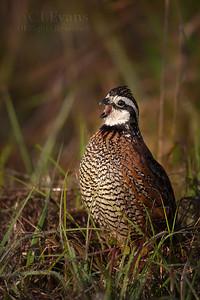 Birds of Kissimmee Prairie Preserve