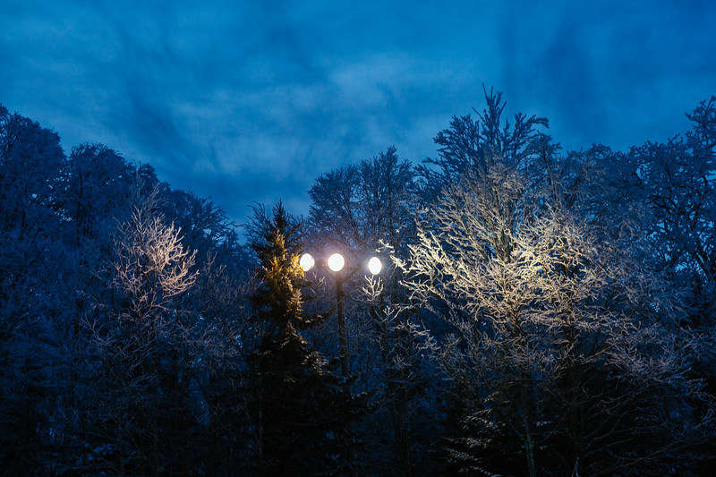 2020-02-01_SN_KS_Frosty Trees-0788.jpg