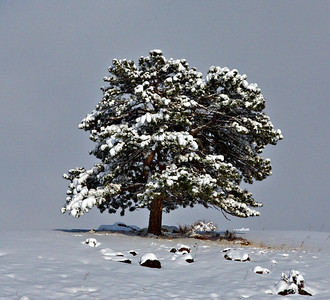 Winter Rockies 2011