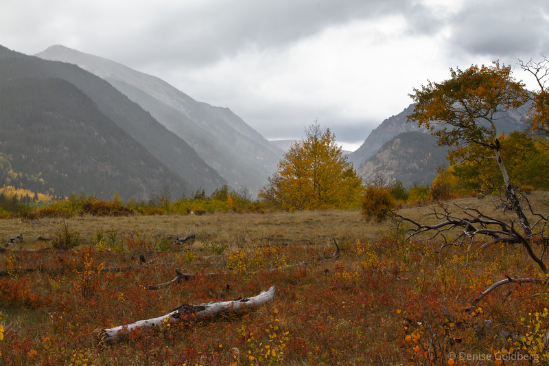 light rain filling in the meadow, clouds drop over mountains