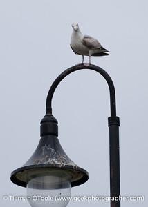 Howth Harbor - 2012-04-08