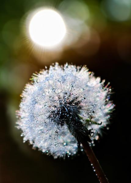 Tiny Drops and Light