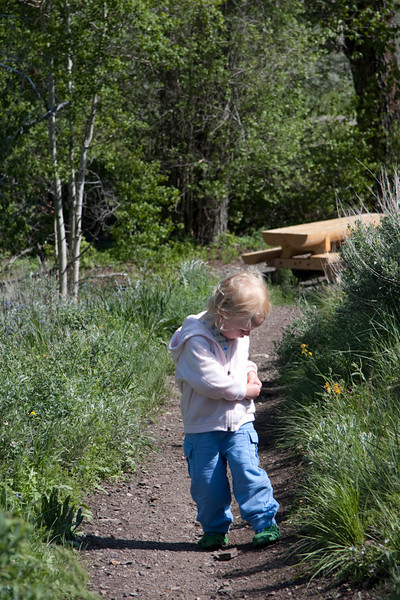 """Collecting """"wrocks"""" along the Corral Creek trail."""