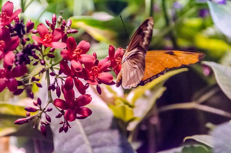Butterflies at NMNH-18.jpg