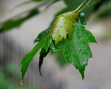 Wet Weekend