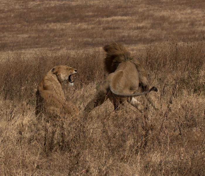 2 Lions.jpg