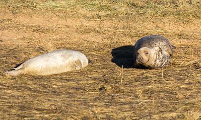 Donna Nook Seal Colony