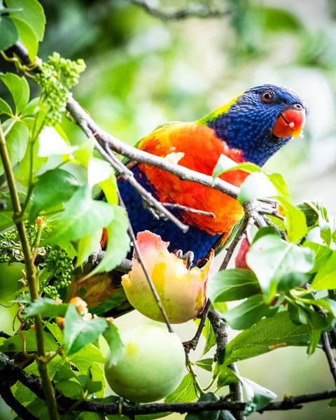 121818  birds  _10.JPG