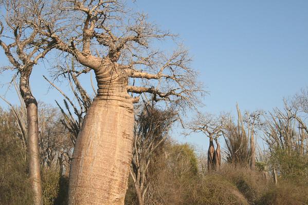 Madagascar Scenery 2007