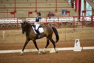 Horse 459