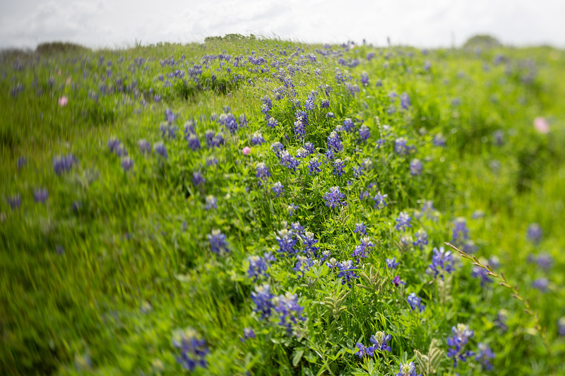2019 Campus Bluebonnets_1678.jpg
