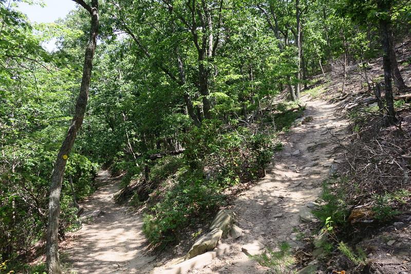 Mountain/Ledge Spring Trail