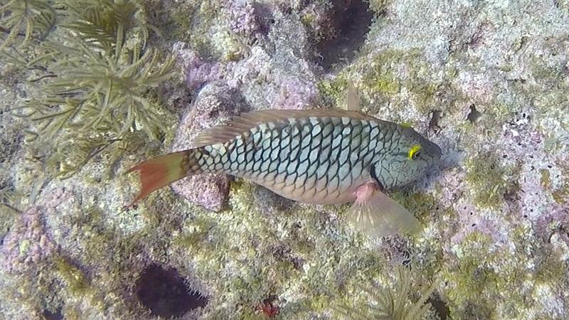 Ciesla-GOPR6622 - KC Plaid Fish.jpg