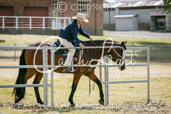 18 Station Horse 4yrs+ over 15hh