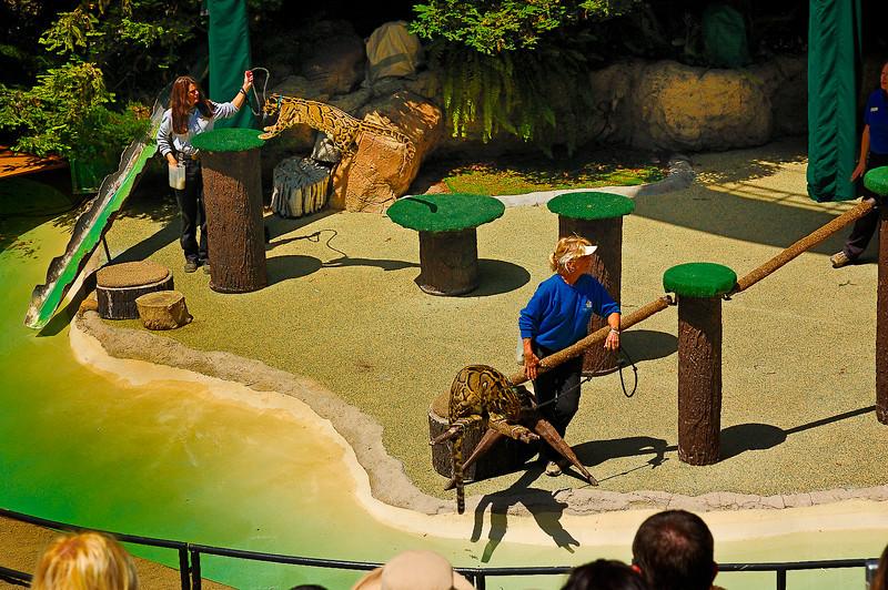 San Diego Zoo-11
