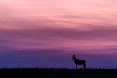 On African Plains