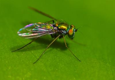 July 2013 Bugs