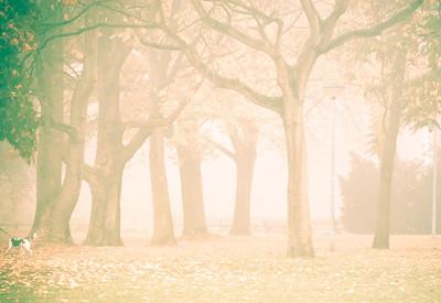 10.11.2011-Kaiser-Willem-Park