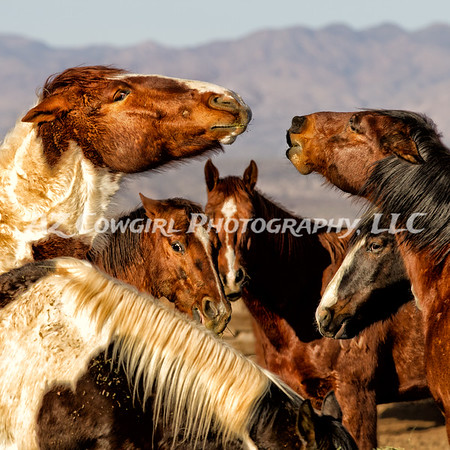This image took first place in the 2013-Ideal Equine Online Contest and received a Judge's Merit award as well. The catagory was Professional Head Study~