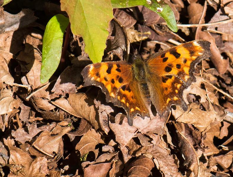 Butterfly 18.jpg