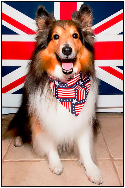 Miller - An American Dog - Living An English Life...