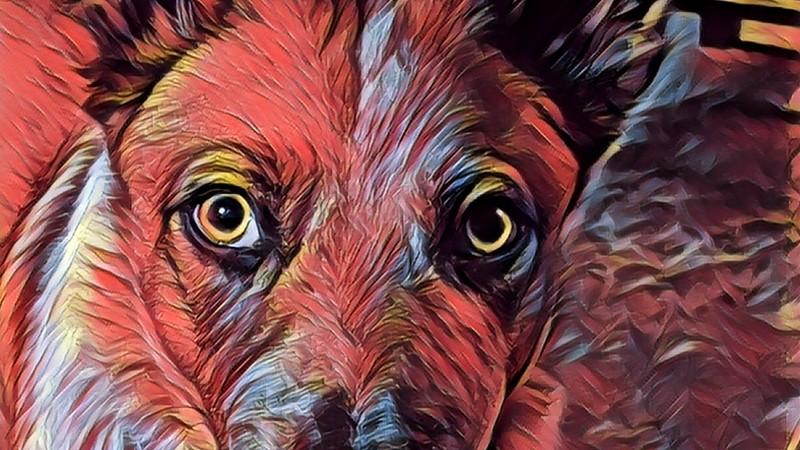 Red Dingo II